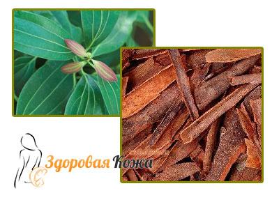 Эфирное масло корицы коры или листьев